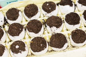 A new experiment for us: Seedlings started in egg shells!